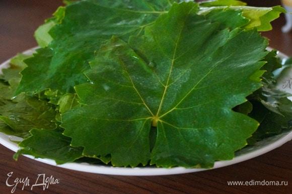 Листья для сармы нужно использовать молодые, светло-зеленого цвета, размером примерно с ладонь. Темные и старые листья не используйте — в готовом виде они будут жесткие. Готовить можно как из свежих листьев, так и из мороженых или из маринованных. В начинку можно добавлять любую зелень и специи по вкусу.