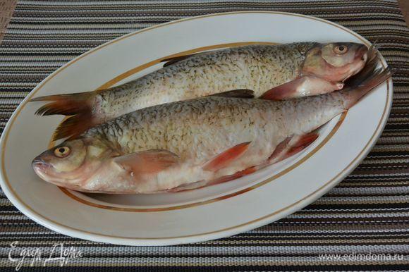 Почистим тушки рыбы, в моем случае это язь.