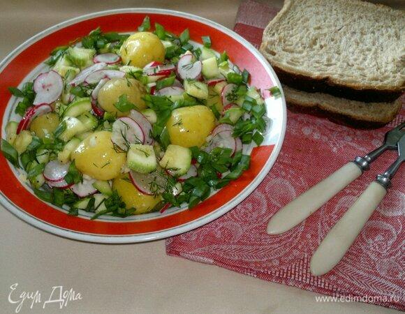 Салат с молодым картофелем, редисом и малосольными кабачками