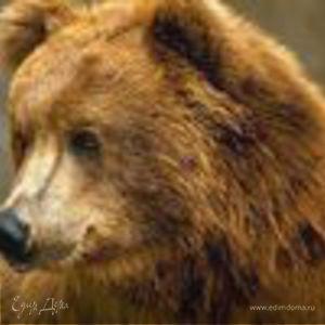 wise_bear