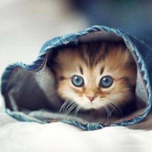 Kitty Blueeyes